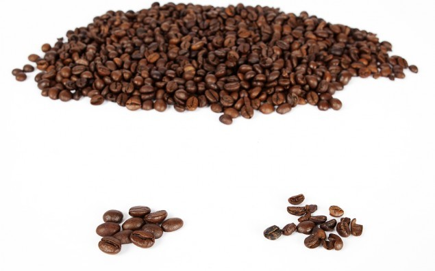 good and bad quality of coffee beans